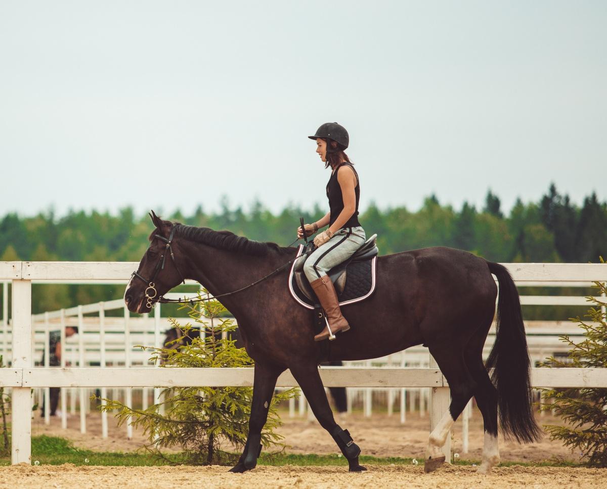 nauka jazdy konnej Dolny Śląsk - Zamek Kliczków